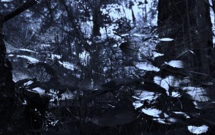 Hidden Webs