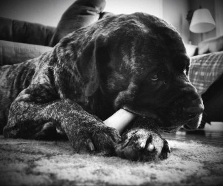 Maximus in black and white